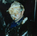 Halfway Night Pie In Face Chief Uhl